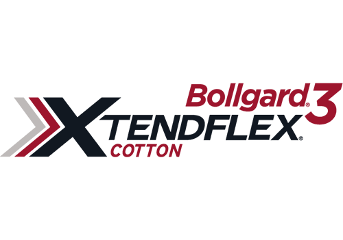 Bollgard 3 Xtendflex Cotton