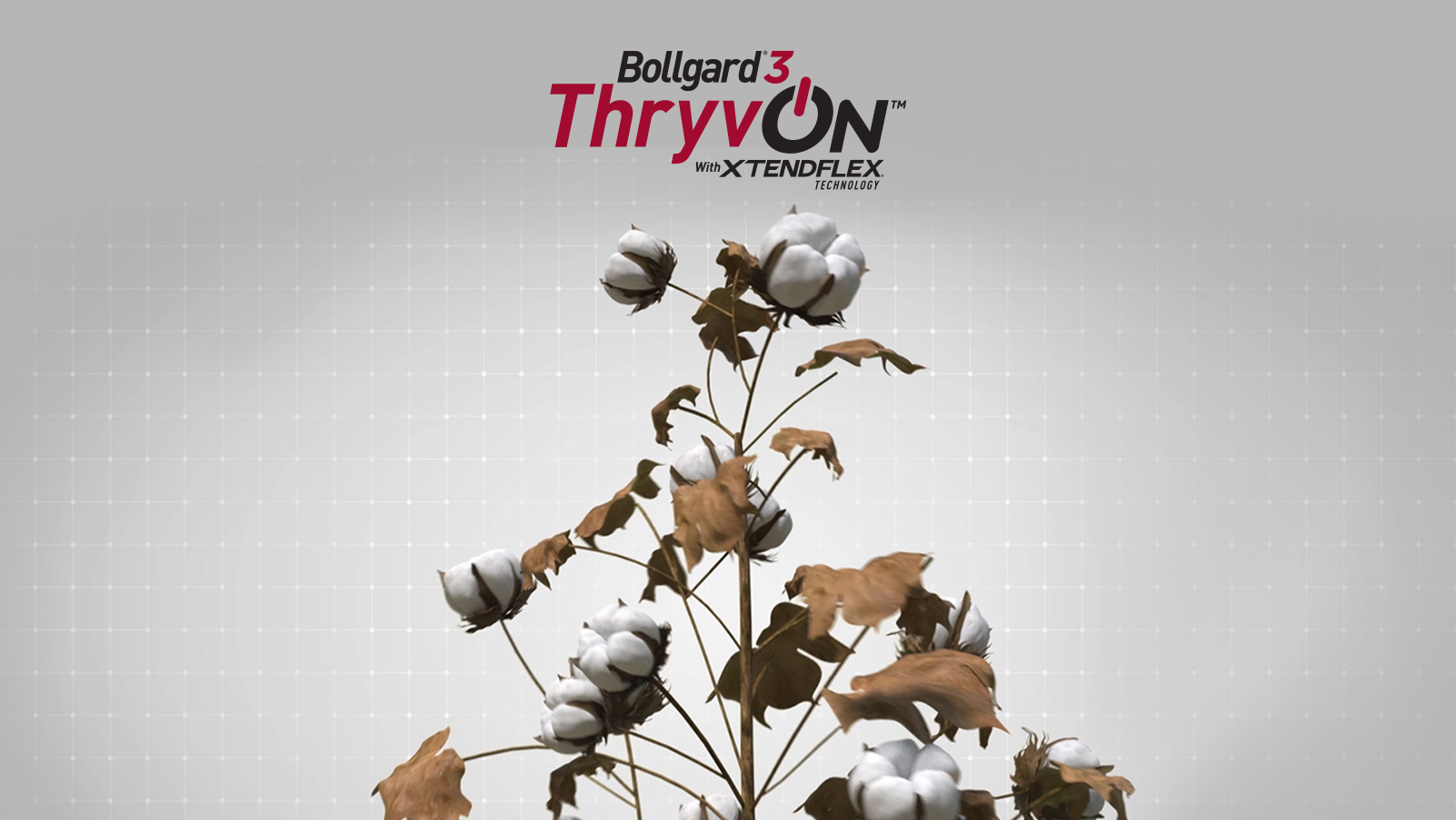Bollgard® 3 ThryvOn™ Cotton With XtendFlex® Technology